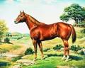 ~^~ quarter horse ~^~